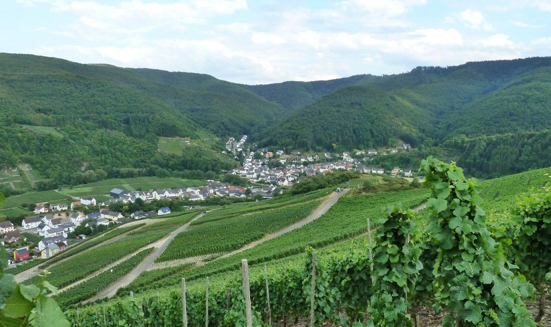 Blick über Weinberge in Rech
